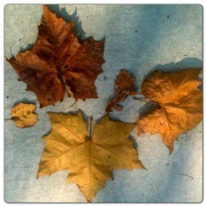 Fallen Leaves Awakened Minds