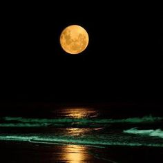 moonlight by the beach